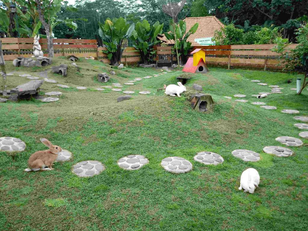 Taman Kelinci di Puri Mataram Sleman
